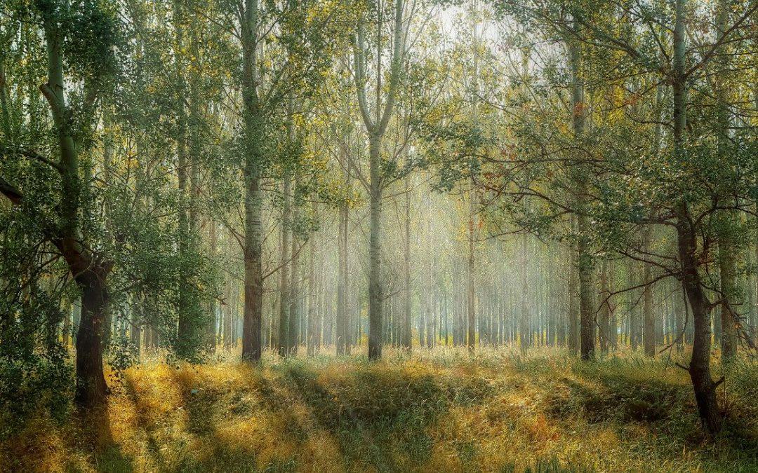 Une gestion durable du patrimoine vert de notre commune de Rixensart ?